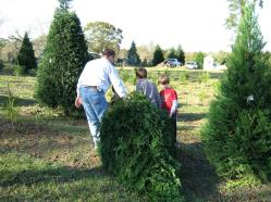 windy hills farm is a choose and cut christmas tree farm located in the community of ethel louisiana in east feliciana parish this land was once part of a - Christmas Tree Farm Louisiana